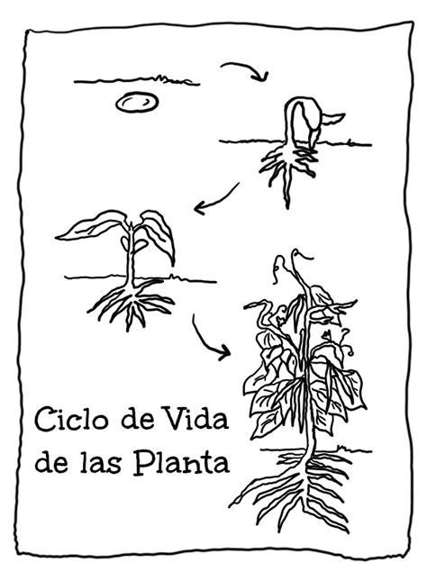 imagen para colrear del ciclo de vida conejo menta m 225 s chocolate recursos y actividades para