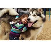 Dog Alaskan Malamute Children Wallpapers HD / Desktop