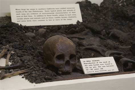 miss history travels to la tar pits museum books the la whendinosaursruledthemind