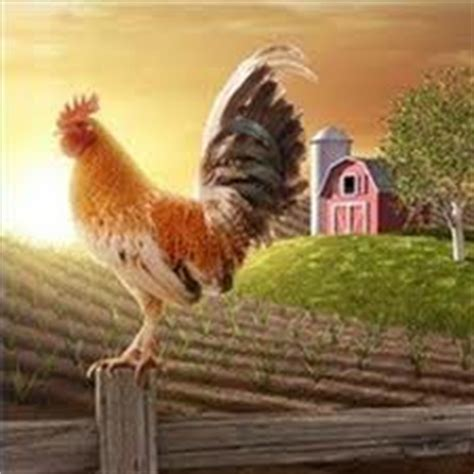 coq a doodle doo food truck katts komments morning rooster