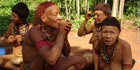 los indios no hacen no brasil atual gt quantos s 227 o onde est 227 o gt popula 231 227 o ind 237 gena no brasil