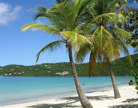 palm tree luxury home gardens beach palm trees