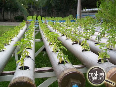 backyard hydroponics hydroponics 19 backyard hydroponics system successful economical aeropo steps to