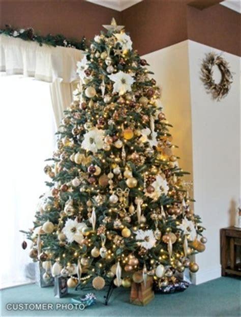 bh noble fir