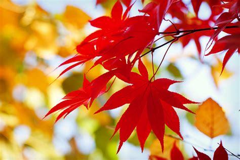 imagenes de hojas otoñales 191 por qu 233 las hojas cambian de color en el oto 241 o