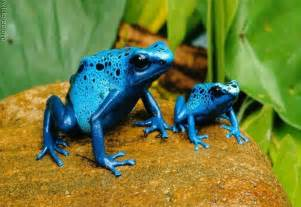 colored frogs frogs with beautiful colors pictures