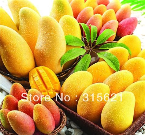 Fruit Mango mangoes the king of fruits its slaves by