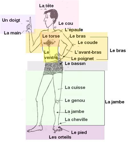 le corps 99 best images about fle lexique du corps on cool games core french and body parts