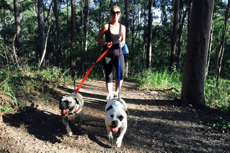 are dogs allowed in national parks 5 pet friendly activities to do this weekend from brisbane
