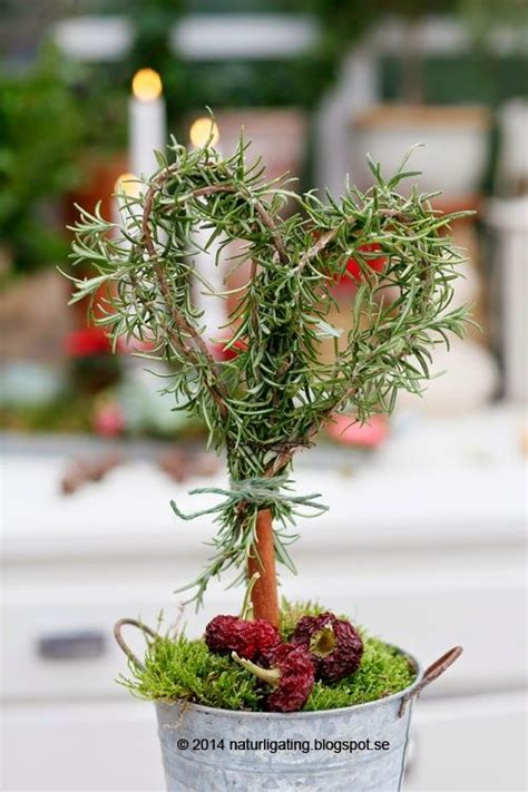 herb topiaries rosemary topiary ting garden garden herbs