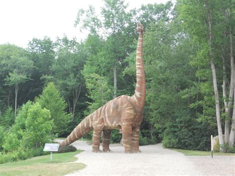 A Place Dino The Dinosaur Place At Nature S Oakdale Ct Top Tips Before You Go Tripadvisor