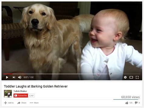 do golden retrievers bark a lot golden retriever the golden retriever network
