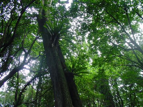 What Does Canopy In The Rainforest Geography 3rd Pd Pre Ap Gt Fennell Gt Flashcards Gt Africa