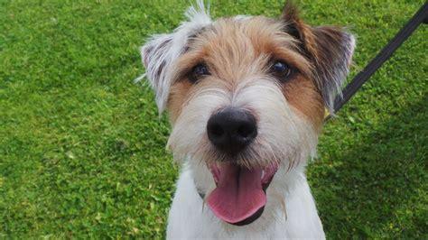 puppy adoption la oakley rescue louisiana brigade