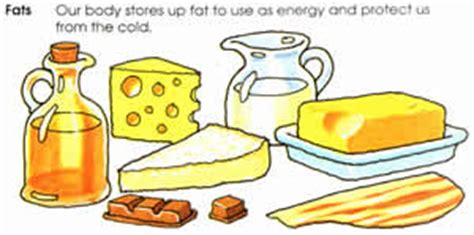 function of healthy fats difference between fats and oils fats vs oils