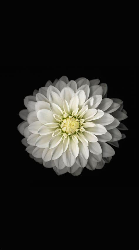 black  white flower wallpapersc iphonesplus