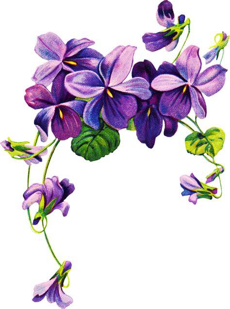 violets vintage clipart tatoo pinterest violet