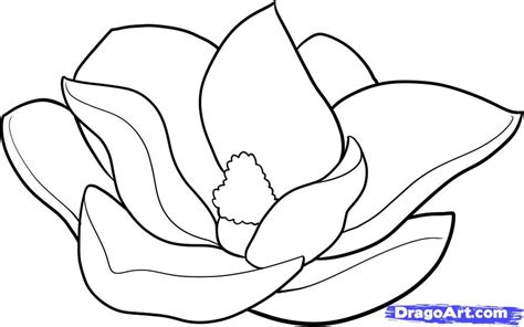 how to draw a magnolia step by step flowers pop culture