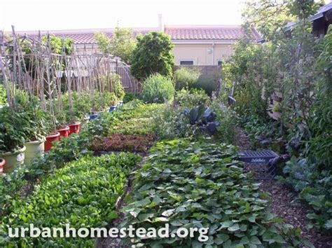 backyard farms beautiful backyard farm in the middle of the city http