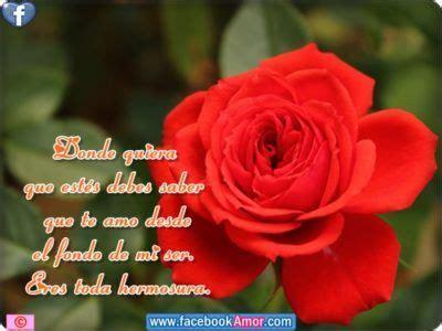 imagenes muy bonitas con rosas imagenes de rosas con frases bonitas dedicar flores
