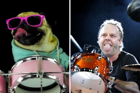 pugs and drummers badass drummer pug performs killer cover of metallica s quot enter sandman quot pawbuzz