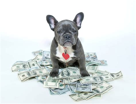 Cost Of Owning A Dog: Averages & Most Expensive Breeds