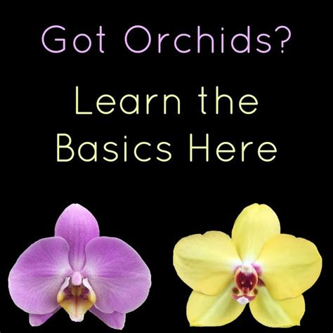 care of orchids after flowering rooftop flower garden chsbahrain