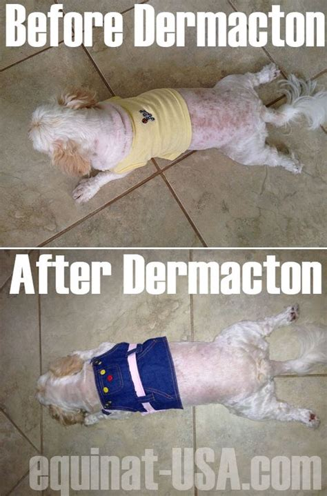 my shih tzu has itchy skin at i was hesitant to purchasing something but i cared more for my dear