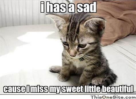 Sad Kitty Meme - sad i miss you quotes