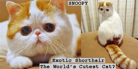 Is this the world?s cutest cat?