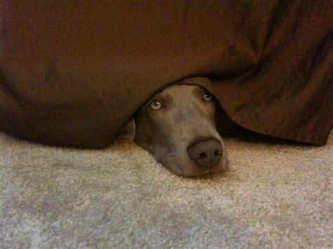 hiding under bed stewieellekidspage