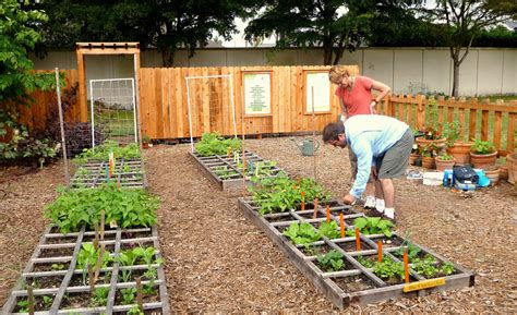 Pros And Cons Of Organic Vegetable Seeds What S The Sustainable Vegetable Gardening