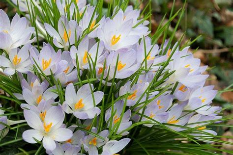 popular spring flowers top 10 of the most beautiful spring flowers flower power