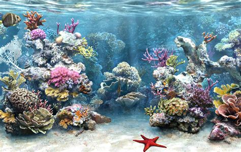 free download wallpaper aquarium bergerak for pc download walpaper aquarium bergerak software fish