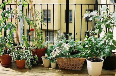 balcony container garden balcony vegetable garden level c albert