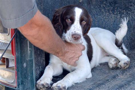 Abwehrmittel Gegen Hunde 716 by Abwehrmittel Gegen Hunde Cdvet Zeckex Hochwirksames