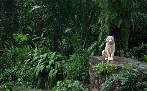 la selva image gallery la selva