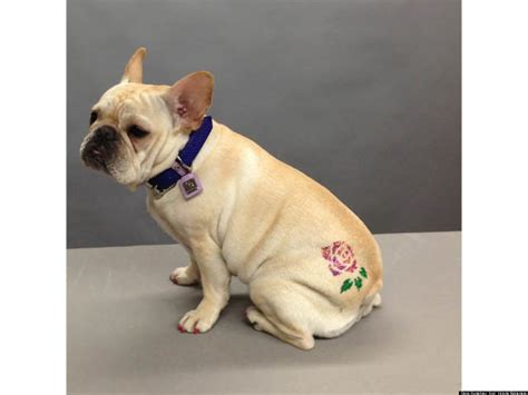 dog tattoos turn preppy pooches into punks huffpost