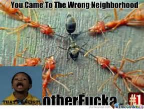 Ant Meme - rmx ant by recyclebin meme center
