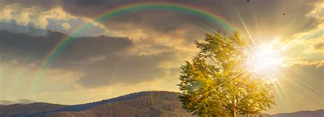 sunlight trees rainbow background poster trees poster