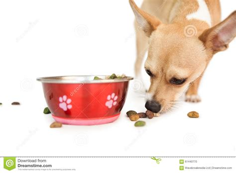 dog eating from bowl cute dog eating from bowl stock photo image 61440770