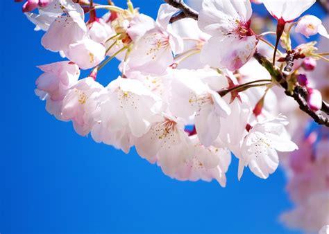 imagenes de flores naturales gratis hermosos fondos de pantalla gratis de flores para ti