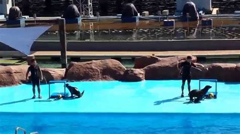 ocean scow sea lion show sa manila ocean park youtube