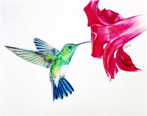 colibri dessin original au crayon de couleur