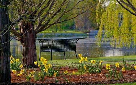 bench  southside pond woodstock capital  canada canada