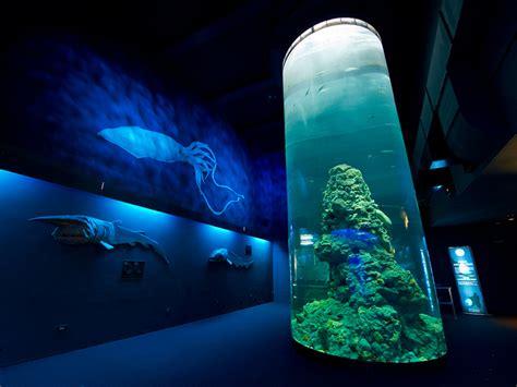 quanto costa l ingresso all acquario di genova acquari d italia cultura e spettacolo idee di viaggio