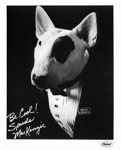 what of was spuds mackenzie spuds mackenzie bud light revives mascot for bowl li