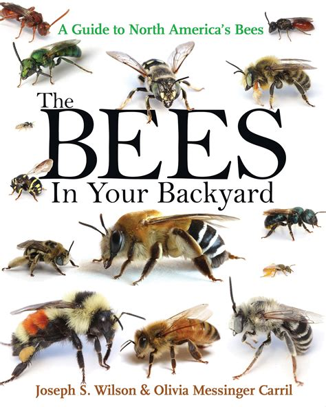 bees in backyard the bees in your backyard a guide to north america s bees