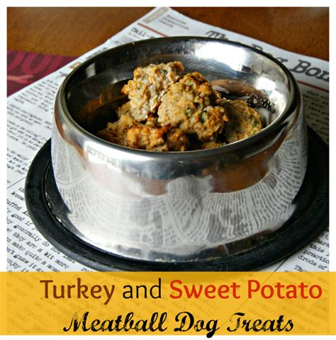 are cranberries bad for dogs treat recipes for thanksgiving