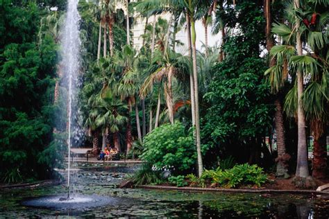 Brisbane Around Image Gallery Lonely Planet Botanic Gardens Brisbane City